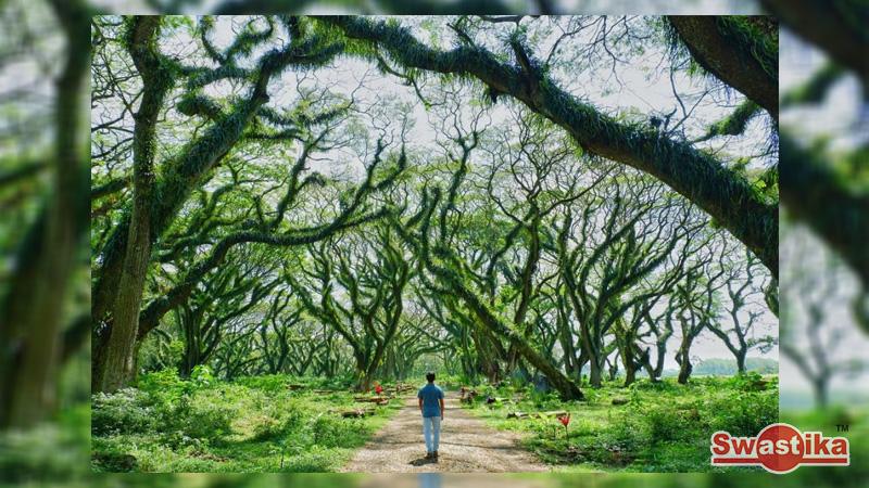 Indonesia Juga Punya Hutan Keren Ala Film Lord of The Rings