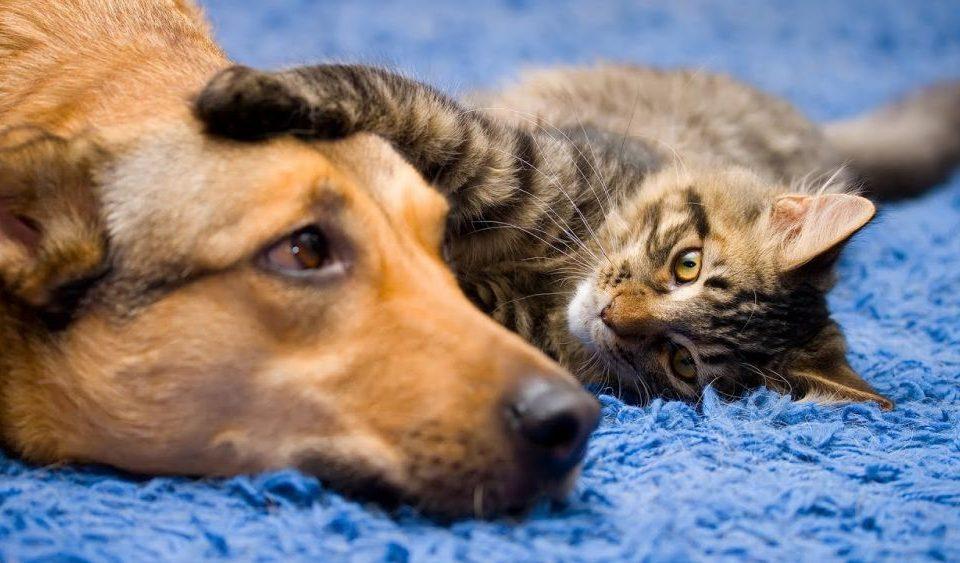 Anjing dan Kucing Ternyata Bisa Donor Darah Lho, Gimana Caranya