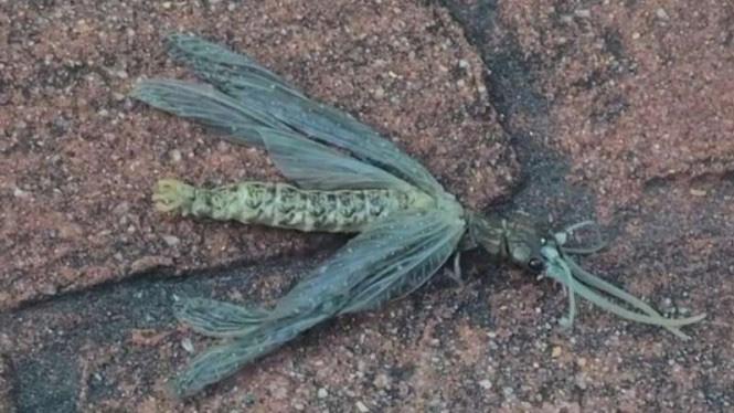 Makhluk Misterius Menyeramkan Ditemukan di Tengah Wabah Corona Amerika