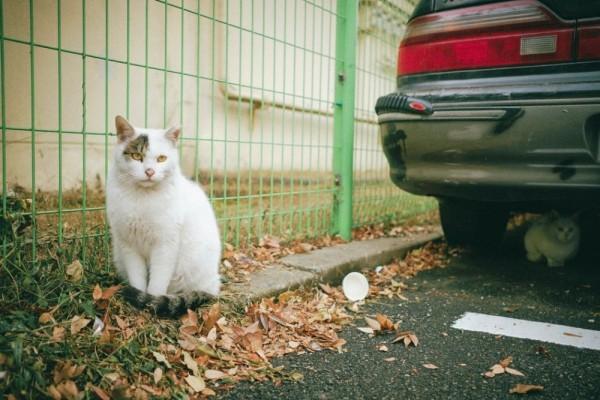 Asal Mula Mitos Menabrak Kucing Bikin Sial, Benarkah dari Mesir