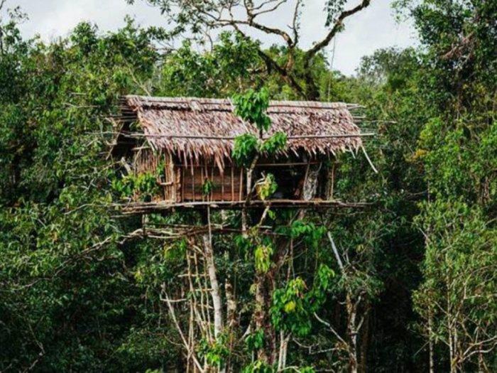 Suku Karowai dengan Rumah Unik di Atas Pohon Tinggi